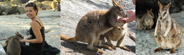 Granite-Gorge-Wallabies